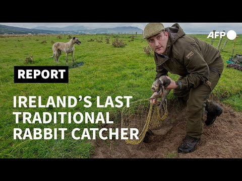 On burrowed time: hunting with Ireland's last traditional rabbit catcher | AFP