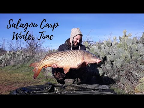 Salagou Carp - Winter Time