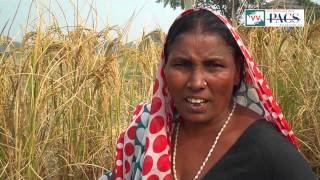 Farms on lease. Video volunteer Satyendra reports from Uttar pradesh