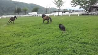 청이는 한6개월정도 되는 강아지입니다 교관님의 응원에 힘얻어서 말을 ...