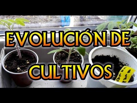 evolucin de los caseroscomo hacer semilleros caserosmi huerto en el balcn