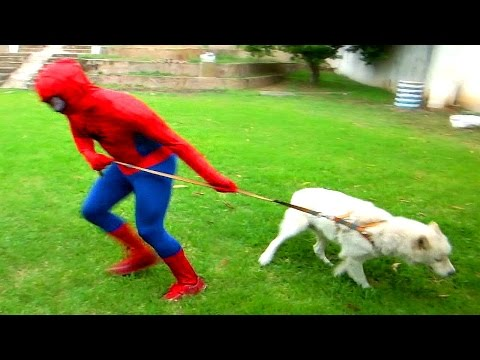 The Amazing Spiderman playing with the fun dog - In Real Life - Superhero Movie