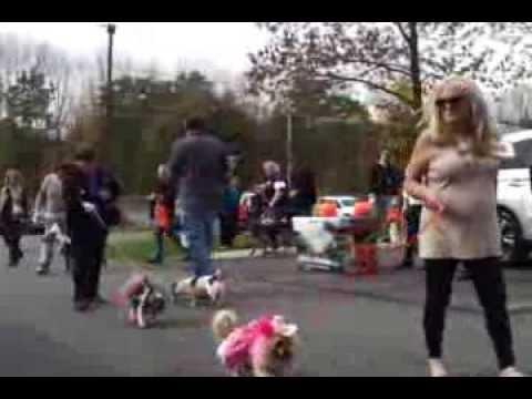 BARKTOBERFEST - Pet Parade