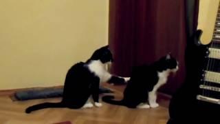 Усыпить кошку на дому(http://miraved.ru/usypit-koshku-na-domu/ Итак, если нужно усыпить кошку на дому – обращайтесь к нам., 2016-10-09T11:28:07.000Z)