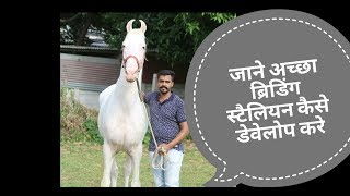 How to develop a good breeding stallion and what is stallion   by jatin patel   Culture Of Horse 