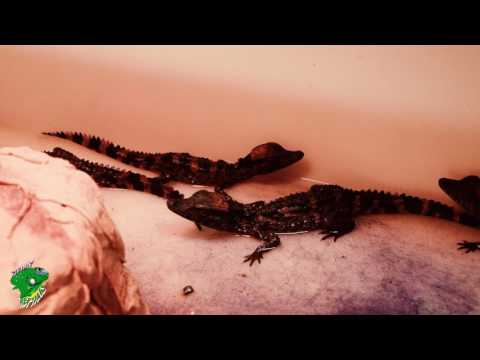 Reptiles Wholesale