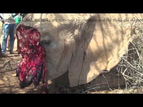 Animal Poaching Awareness Video: GRAPHIC