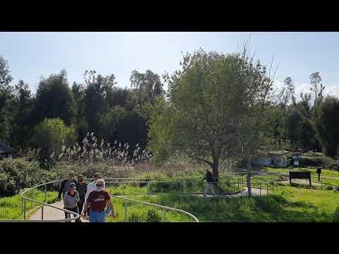 Hula Valley-Northern Israel #Part1 #KK