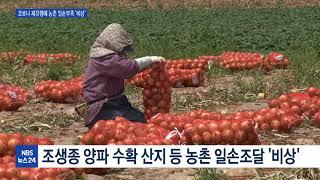 농번기 일손부족 '설상가상' 코로나 재유행에 농사 '비…