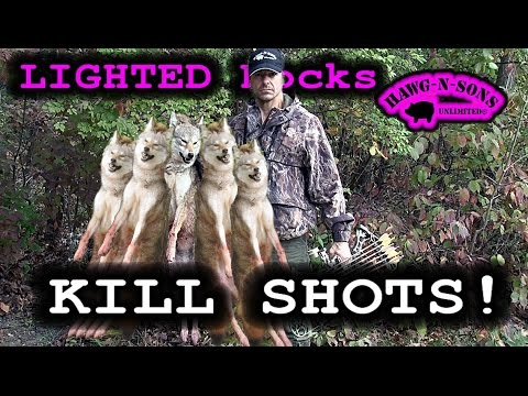 Fastest 5 Coyote KILL SHOTS Ever - BowHunting Whitetail Deer Lighted Nocks