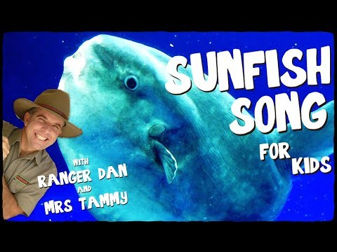 SUNFISH SONG FOR KIDS   Under The Sea Songs   Animal Songs   Kids Songs   Creation Connection
