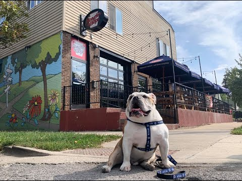 Hoagies And Hops Supports Indiana Bulldog Rescue