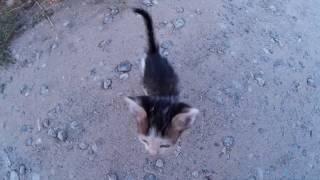 Маленький бездомный котенок на улице - бедный, несчастный котик. Очень жалко беззащитного животного