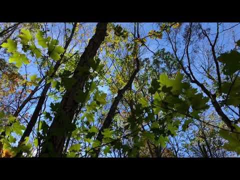 Dummy Line Trail Land Trust