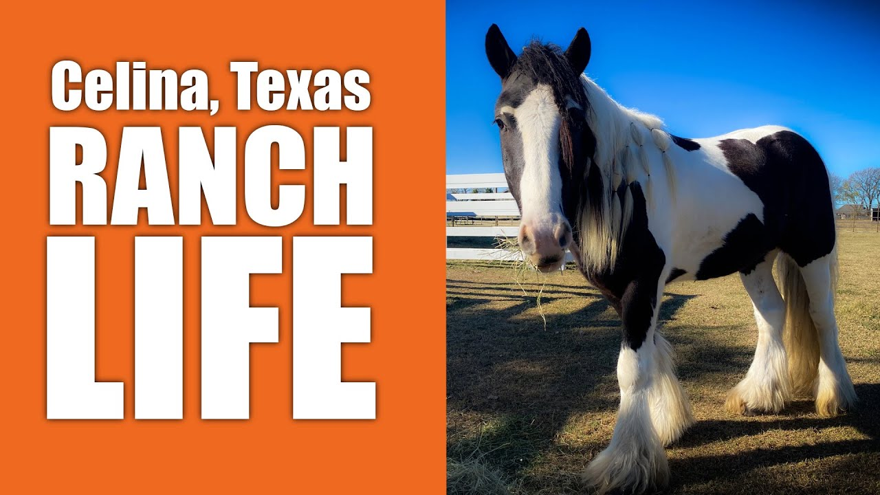 Celina Texas Real Estate Ranch Life 3