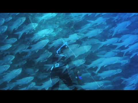 Beautiful moi fish farms and giant trevally (ulua) in Hawaii