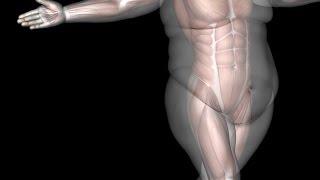 Лечение ожирения. Современная концепция(Обсудим все, что стоит знать о лечении ожирения. Как всегда все бесплатно. Регистрация: https://goo.gl/forms/vTPFfDI4qONbnL9M2..., 2016-10-25T15:13:26.000Z)