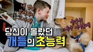 강아지가 가진 놀라운 초능력 11가지