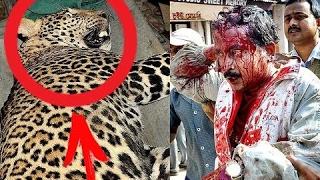 Ужасное нападение животных на людей. Самые опасные убийцы людей / Шокирующие кадры