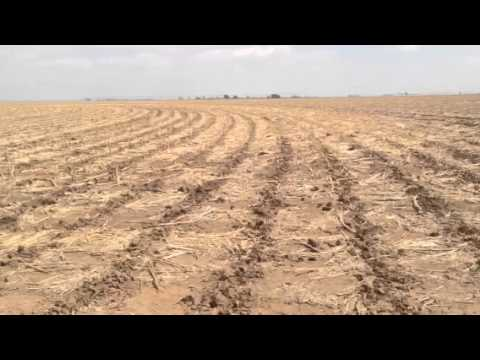 Plainview Texas (Dry Enough?)