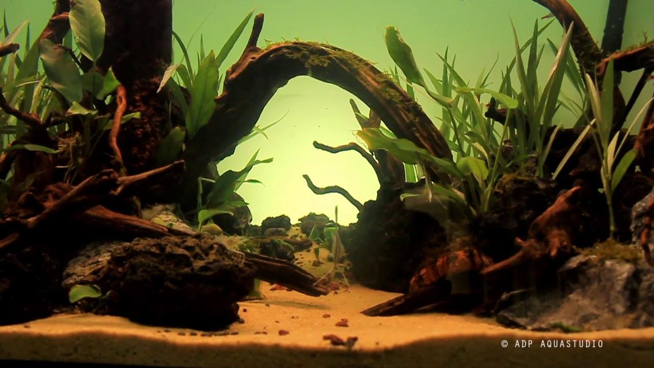 Nature aquascaping | 150cm tank | தமிழ் | aquascaping in ...