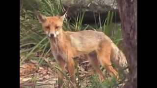Животные Австралии(, 2013-02-19T10:39:34.000Z)