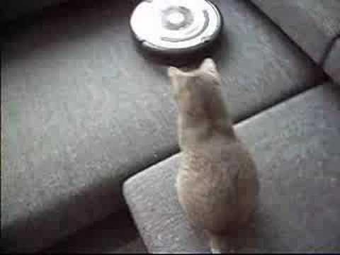 Tyson VS Roomba