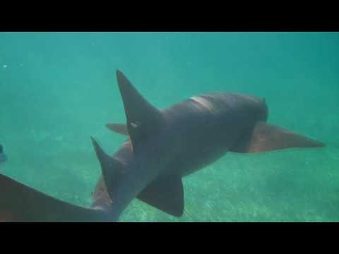 Hol Chan Marine Reserve and Shark Ray Alley in Belize