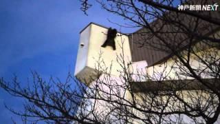西宮市河原町に出没したサルは市立中央体育館と武道場の屋上に逃げ3日...