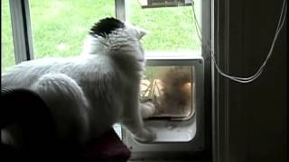 """Squirrel tries to get in cat door, cat says """"no!"""" Mary Cummins, Animal Advocates"""