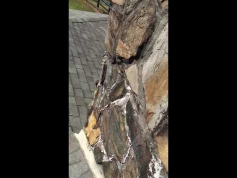 Roof Repair for local real estate agent in Ball Ground
