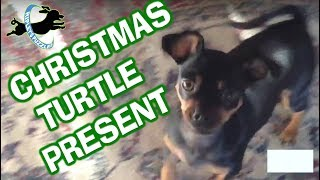 Christmas Turtle thumbnail