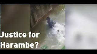 Gorilla shooting: Thousands sign petition over gorilla's death
