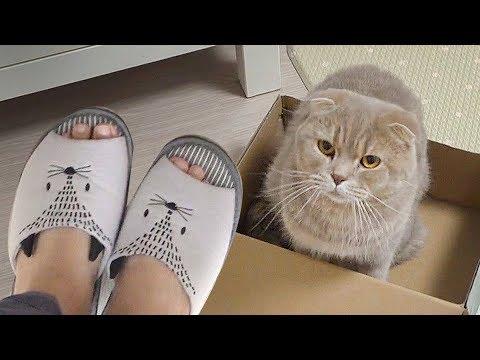 고양이 이즈는 슬리퍼가 무서워Iz the cat is afraid of Slippers [SURI&NOEL]