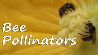 Bee Pollination - A Beautiful Natural Act