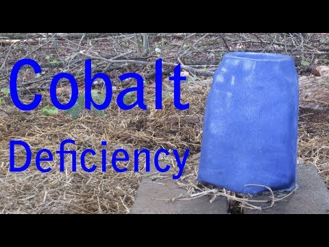 Cobalt Deficiency in Goats
