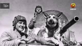 Подготовка собак к поисково-спасательным работам