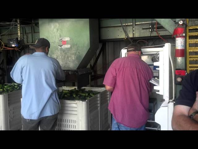 Mt Olive Pickle Buying Station Produce Scan Implementation