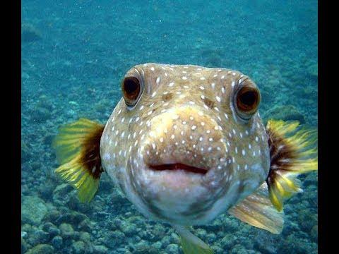 следует брак рыба с рыбой Халаты