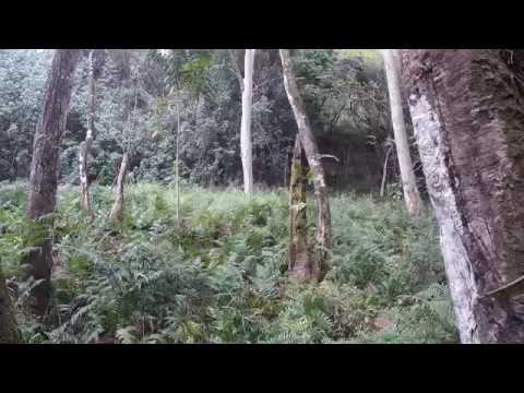 Kauai Ho'opi'i Trail