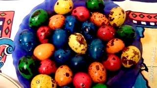 Красим перепелиные яйца. We colorable quail eggs in different colors.