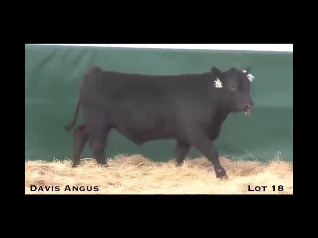 Davis Angus Lot 18