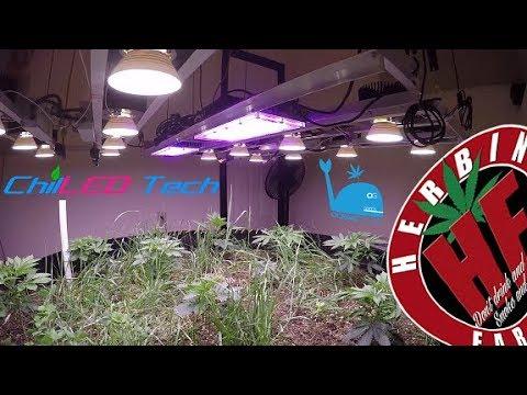 Indoor Organic Farming Cycle 3 No Till 5