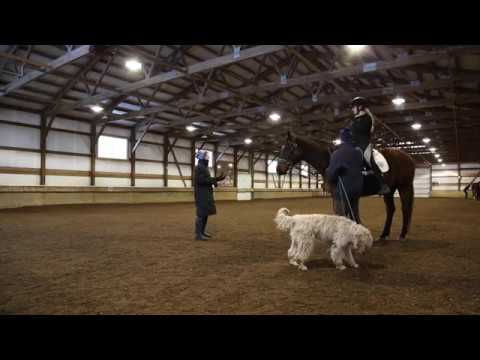 Lunge Line Lesson: Molly and Meeko