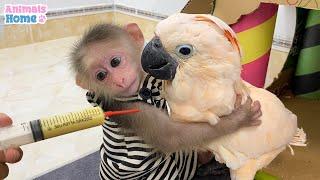 Smart BiBi helps dad feed baby parrots