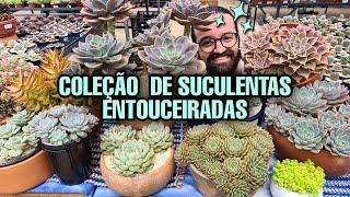 Como cultivar SUCULENTAS e fazer lindas TOUCEIRAS