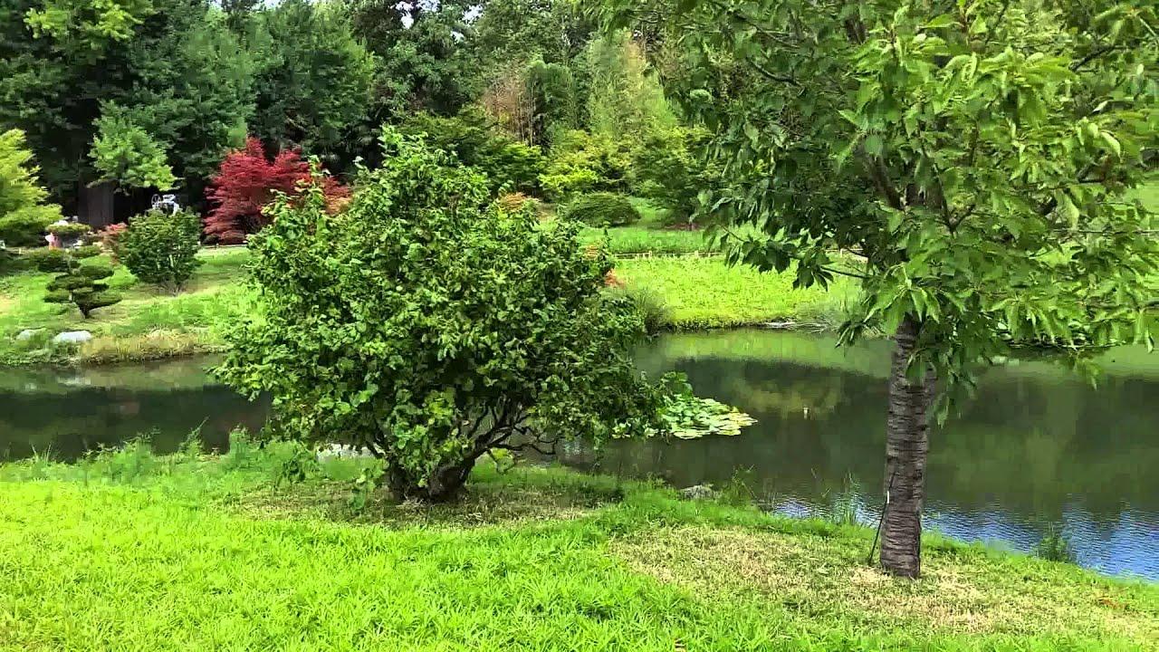 Le jardin japonais de la bambouserai d Anduze