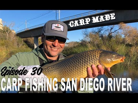 Carp Goes Beast Mode On Trout Angler | San Diego River