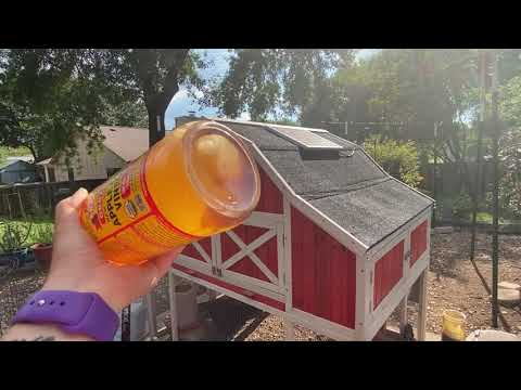 water-additives-for-backyard-chickens