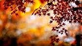 3b58f3c6341bbd Happy Thanksgiving - Tommy s Window Inspirational Slideshow - YouTube